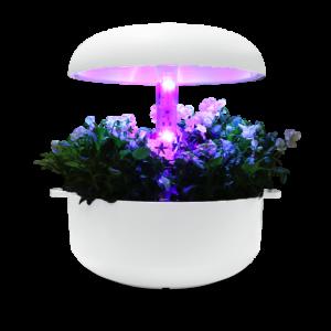 plantui-light-block